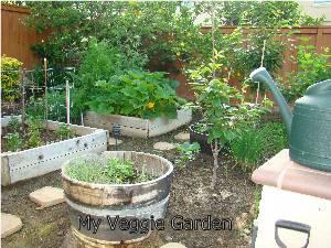 Garden spring 2009