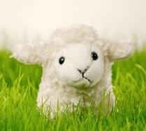 760972_lamb