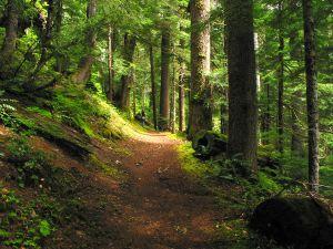 311125_forest_path_i
