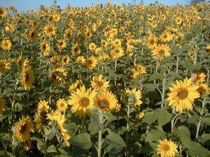 Flowers.003