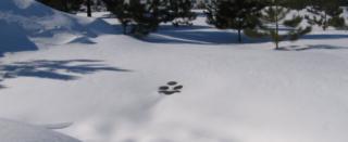 Joanns paw print snow