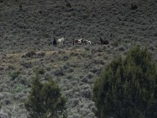 Mustangs 3