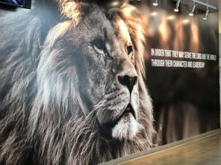 Lynfield lion