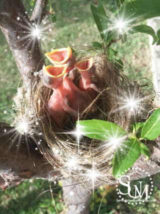 Sparkly nest